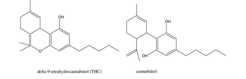 CBD vs THC blog